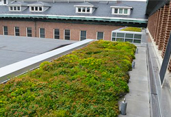 UIUC Lincoln Hall Green Roof 1