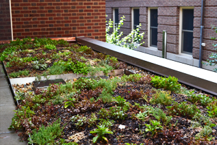 UIUC Lincoln Hall Green Roof 2